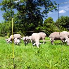 Schaf- und Ziegenhaltung